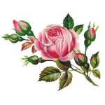 Punto Croce Schema di Ricamo – Romantica Rosa con Bocciolo