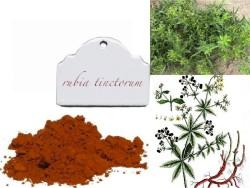 rubia-tinctorum